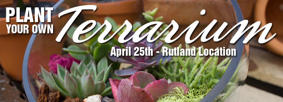 plant your own terrarium