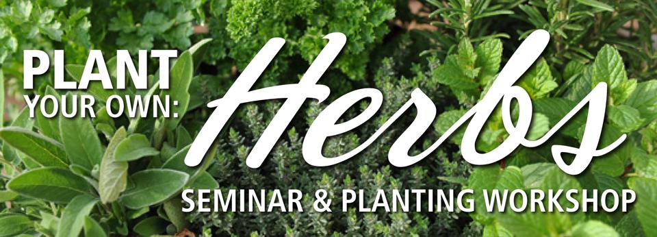 pyo herbs