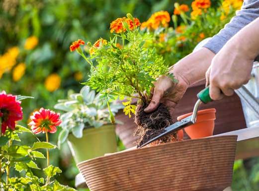 Garden Time Garden Center in Queensbury NY & Rutland VT