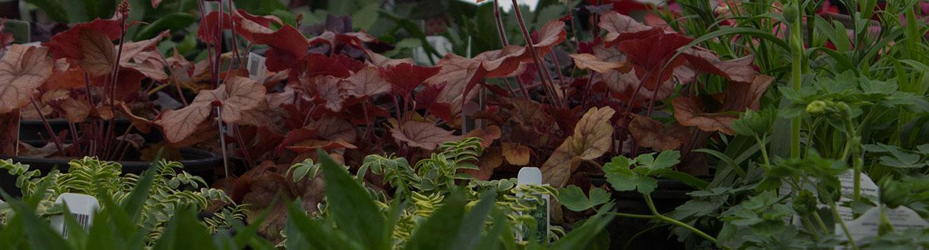 Botanicals at Garden Time's Garden Center