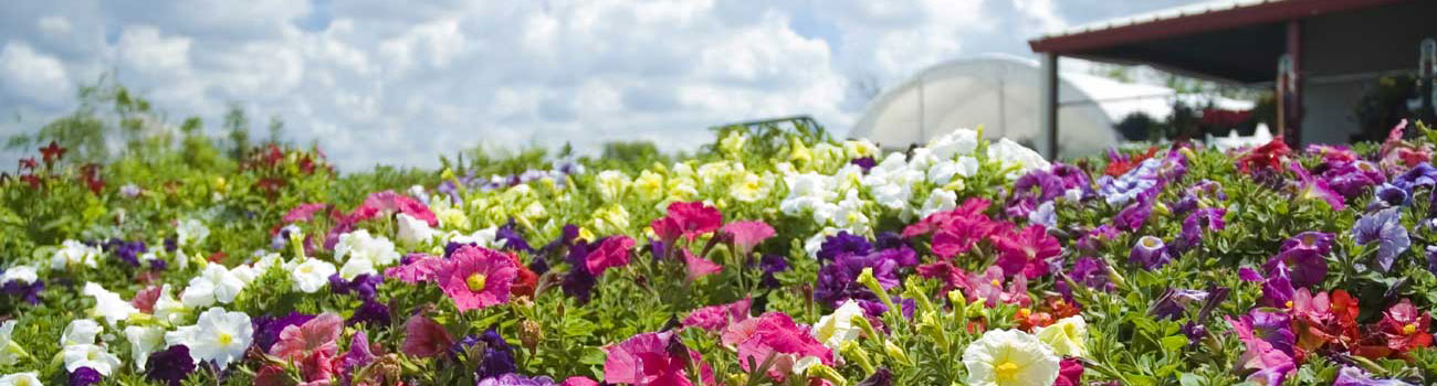 Garden Center flowers at Garden Time in Queensbury, NY